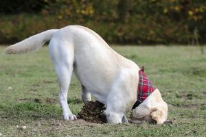 Dog digging hole